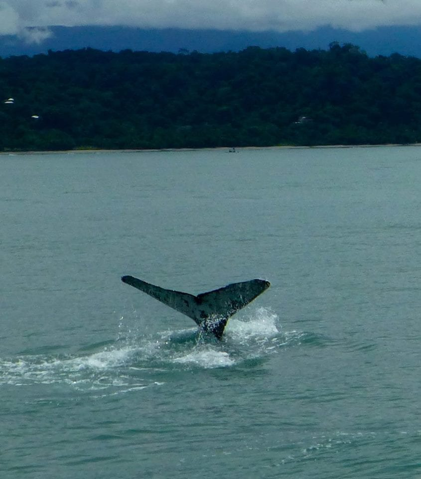 Whale Tale in Costa Rica with Jennifer Hough